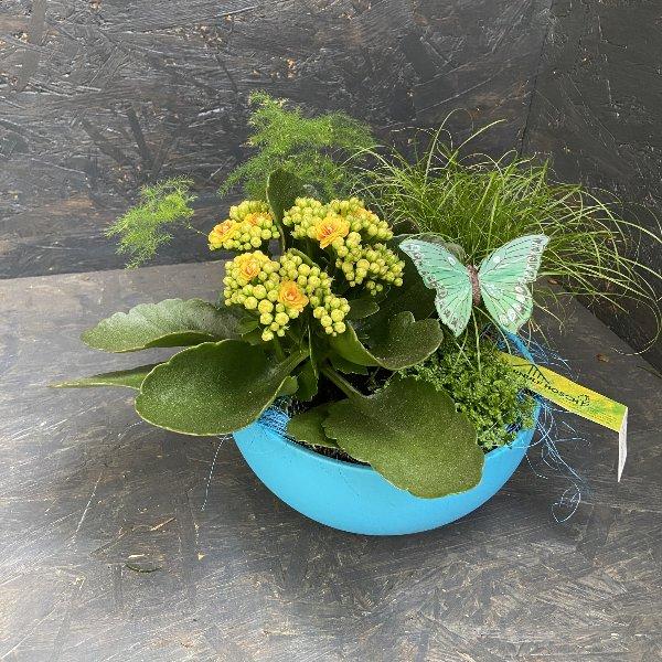Bepflanzte Schale in gelb-blau Bild 1