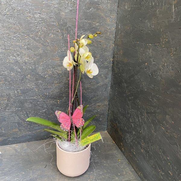 Orchidee in weiß, mit Schmetterling Bild 1