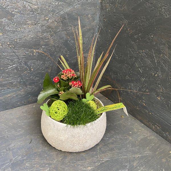 Bepflanzte Schale mit Minipflanzen Bild 1