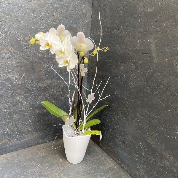 Orchidee, weiß Bild 1