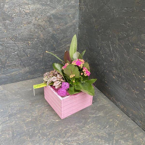 Würfel aus Holz, mit Minipflanzen bepflanzt Bild 1