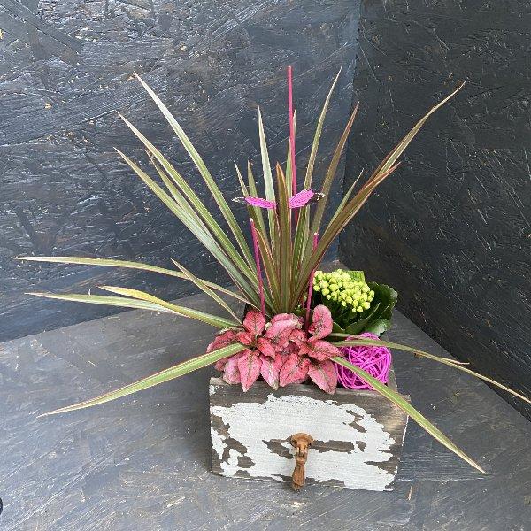 Holzschublade bepflanzt mir Minipflanzen Bild 2