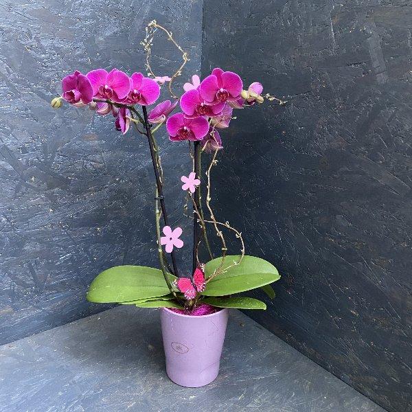 Orchidee, in Farben, schön dekoriert Bild 1