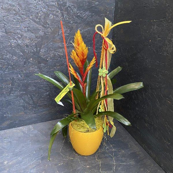 Bromelie, in Farben,  mit Gefäß und Deko Bild 1