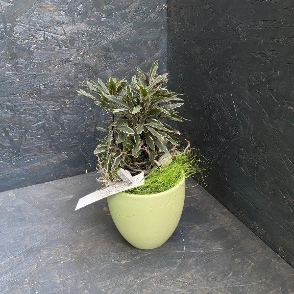 Grünpflanze dekoriert Bild 1