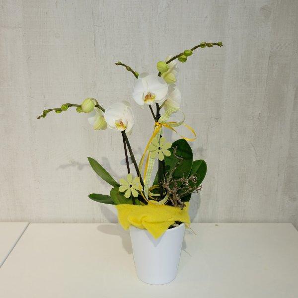 Muttertags-Orchidee Bild 1