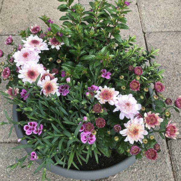 Rosablütenvielfalt Bild 1