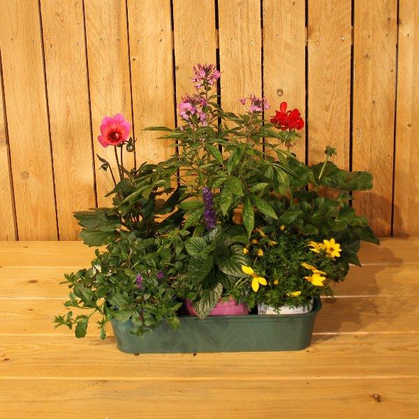 Pflanzen des Jahres Mix Bild 1