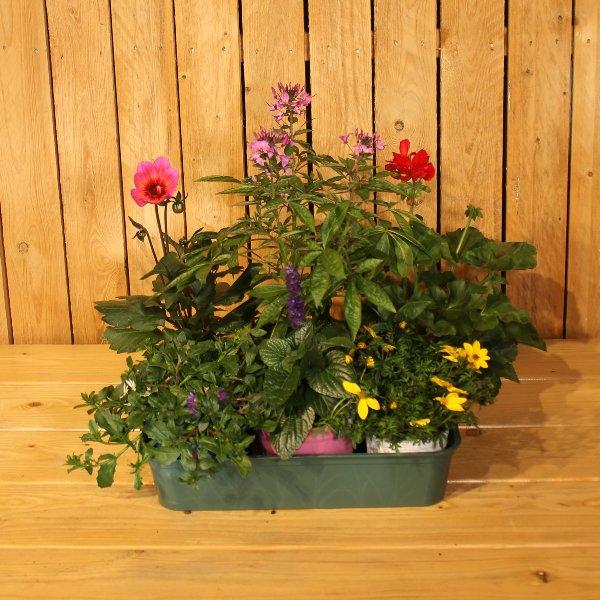 Pflanzen des Jahres Bild 1