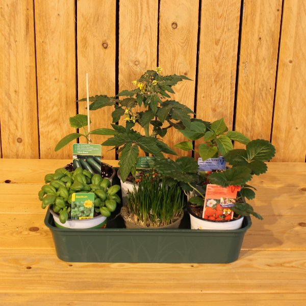 Snackpflanzen Bild 1