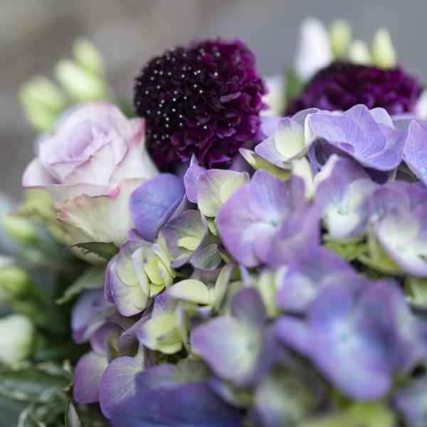 Hortensienliebe Bild 2