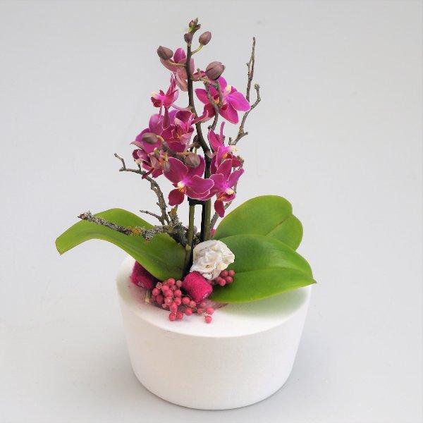 Orchidee Dezenta 2 Bild 1