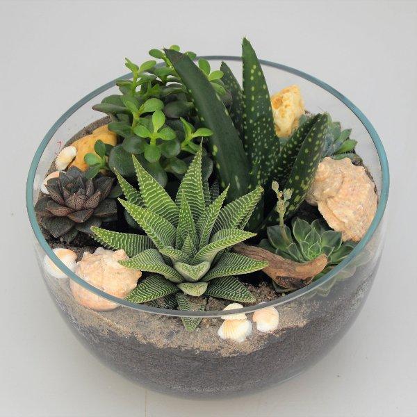 Glasgarten L (25cm) Bild 1