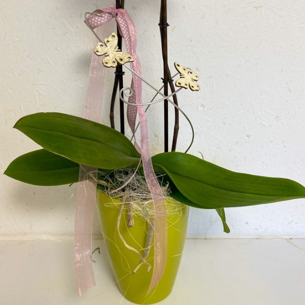 Dekorierte Orchidee mit Übertopf Bild 2