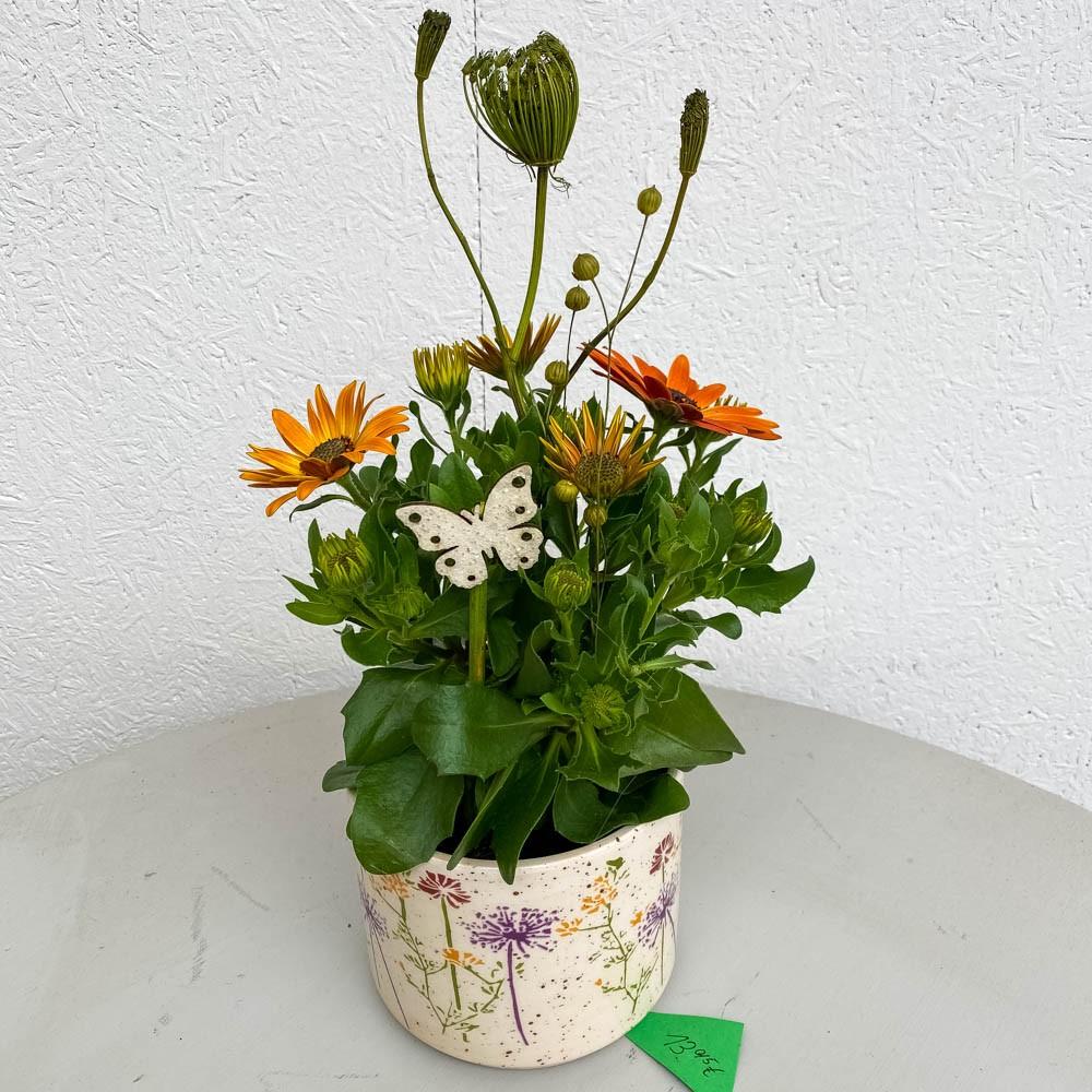 Dekorierter Polarstern in Blumen-Übertopf Bild 1