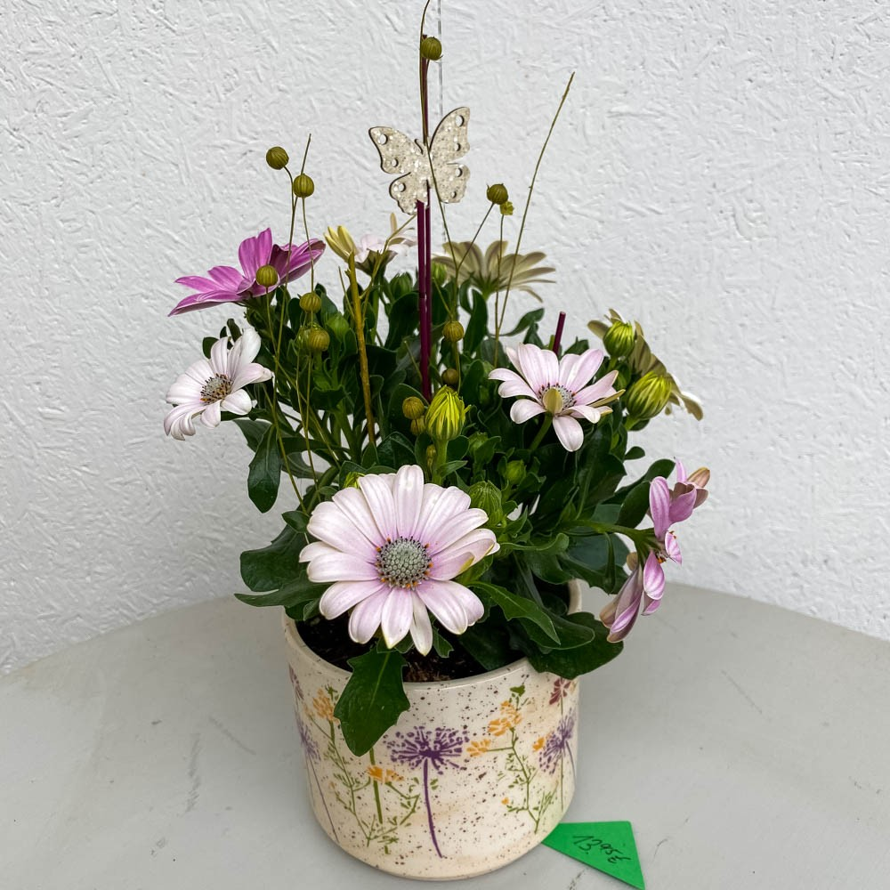Dekorierter Polarstern in Blumen-Übertopf Bild 2