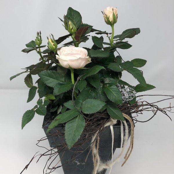 Rose in Metalltopf Bild 1