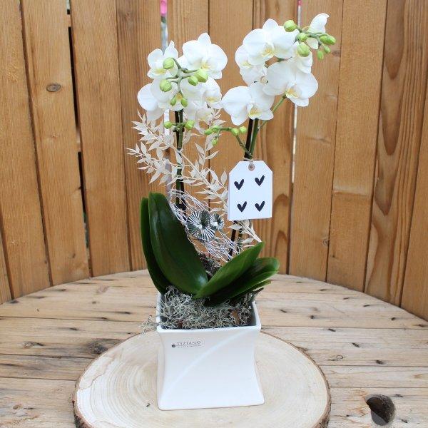 Orchidee in Tizianotopf mit Kärtchen Bild 1
