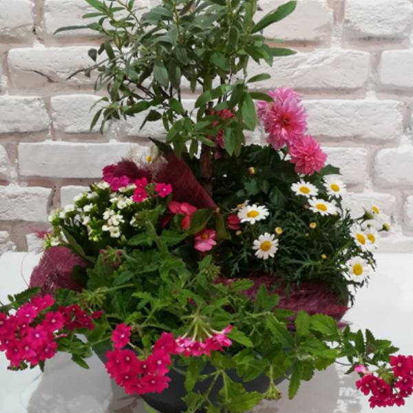 Scha 3    Bepflanzte Schale in pink-weiß-grün Tönen Bild 1