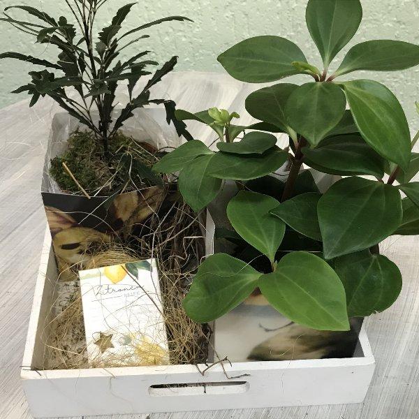 Grünpflanzenduo mit Seife Bild 1