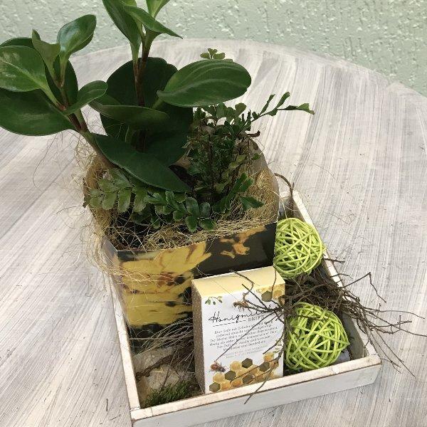 Grünpflanze in der Tüte Bild 1