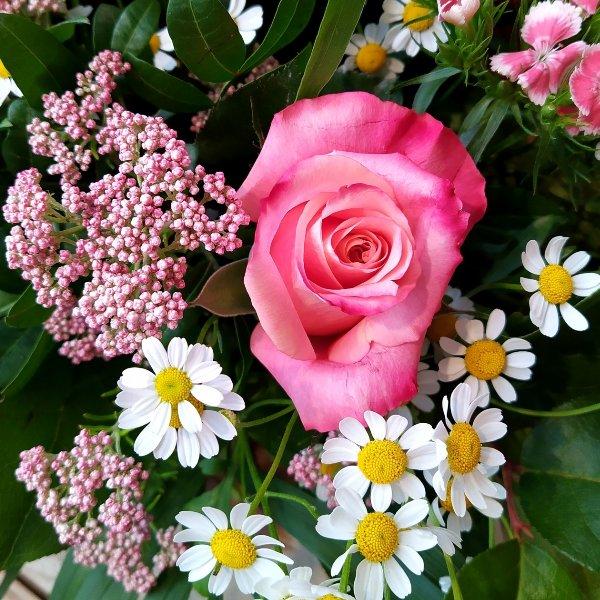 Ein rosa Wiesentraum Bild 3