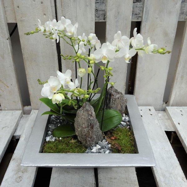 Schale Orchidee Bild 1