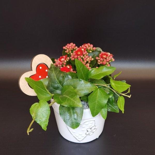 Dekorierte Minipflanze Bild 1