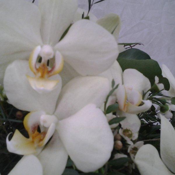 Urnenkranz Orchidee weiß Bild 2