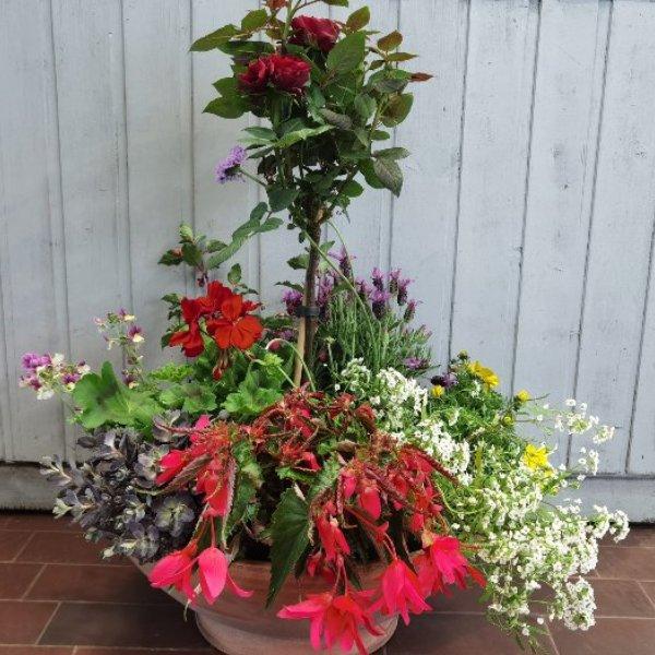 Blumenschale mit Rosen-Hochstämmchen Bild 1