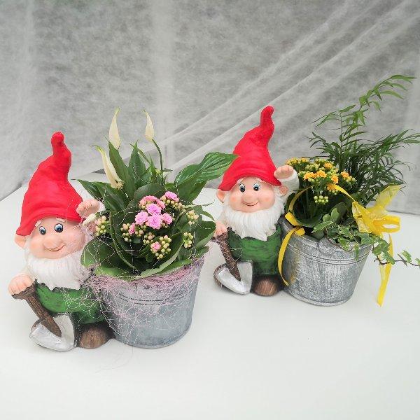 Zwerg mit Zimmerpflanzen Bild 1