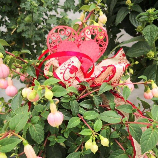 Blumenstämmchen mit Unterbepflanzung Bild 7