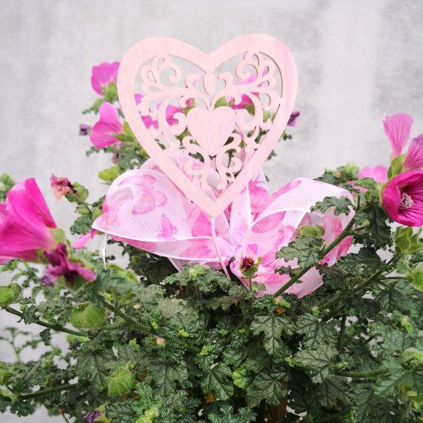 Blumenstämmchen mit Unterbepflanzung Bild 6
