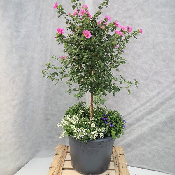 Blumenstämmchen mit Unterbepflanzung Bild 2
