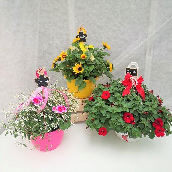 Blumenampel Bild 1