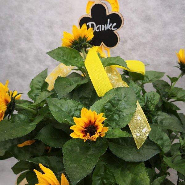 Blumenampel Bild 5