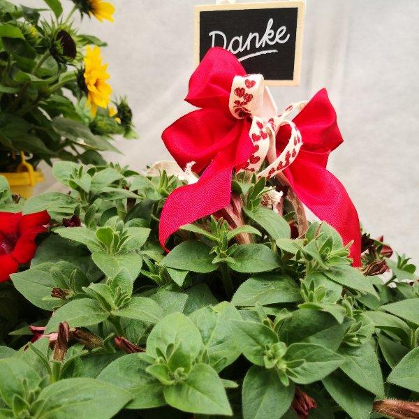 Blumenampel Bild 4