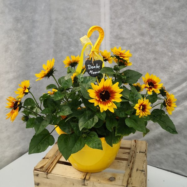 Blumenampel Bild 2