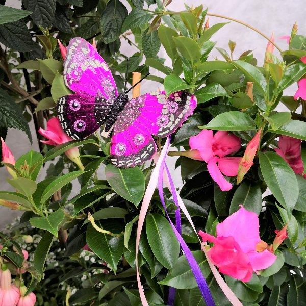 Blumenstämmchen mit Unterbepflanzung Bild 8