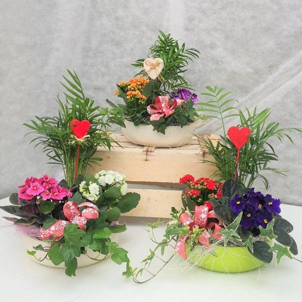 Pflanzschale mit Zimmerpflanzen Bild 1