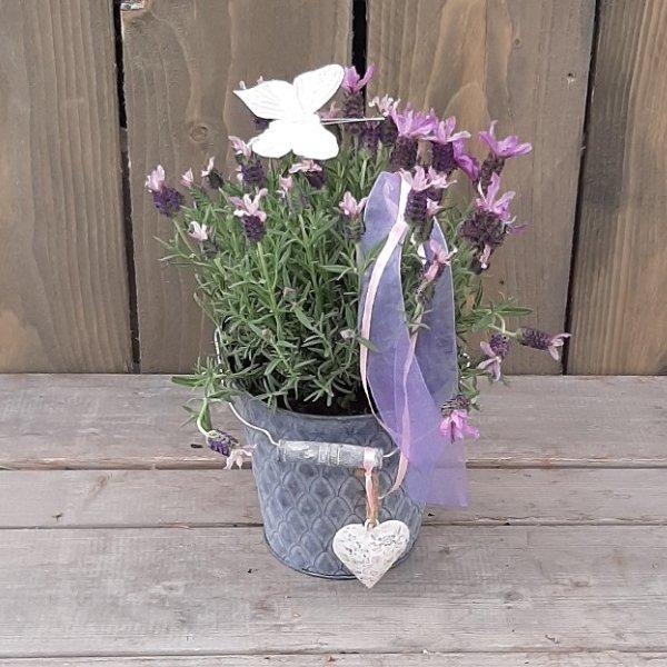 """Lavendeltopf   """"Sommerduft"""" Bild 1"""