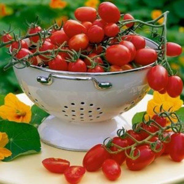 Pflaumen-Kirsch-Tomate Rot Bild 1