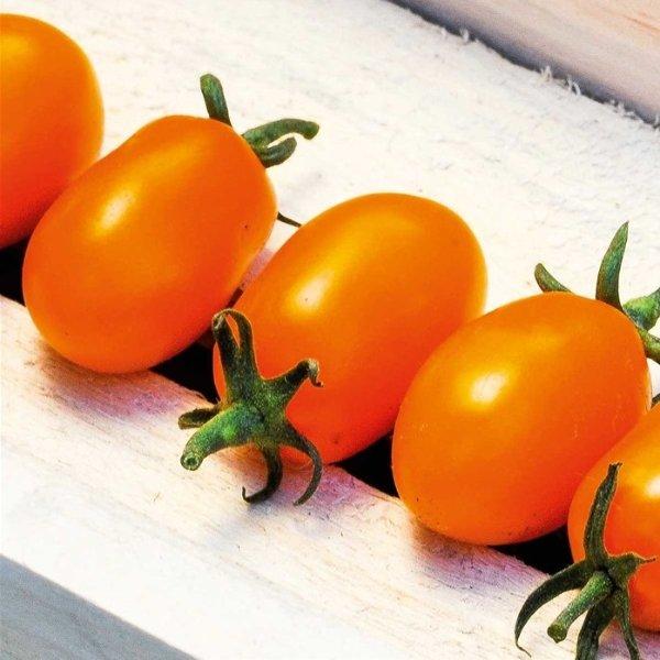 Pflaumen-Kirsch-Tomate Orange Bild 2