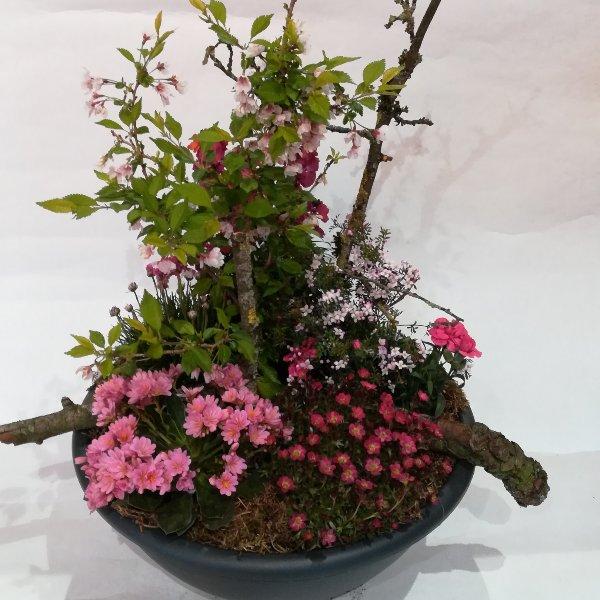 Grabscha 4    Bepflanzte Schale in pink-rosa Bild 1