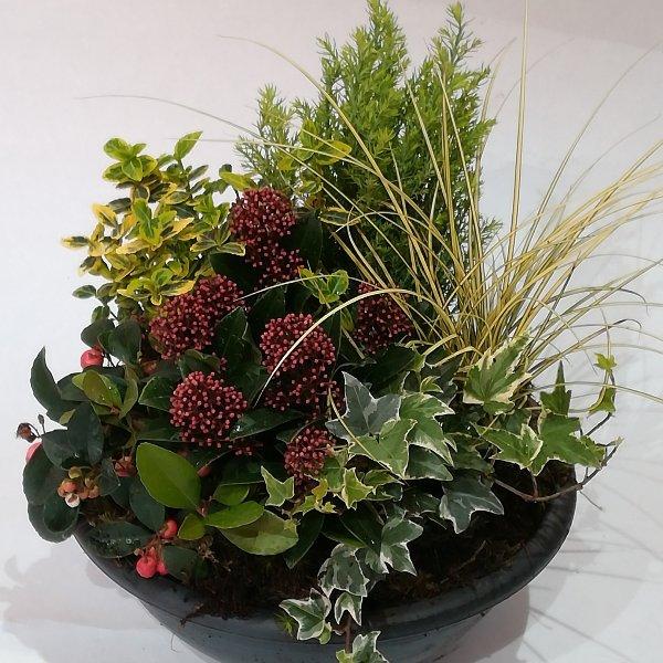 Grabscha 7  Bepflanzte Schale Bild 1