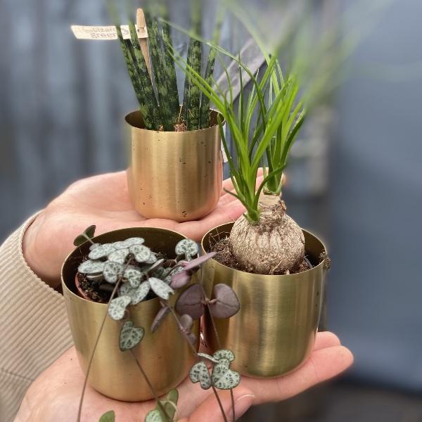 #P1 Baby-Pflanze Bild 8