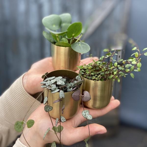 #P1 Baby-Pflanze Bild 9