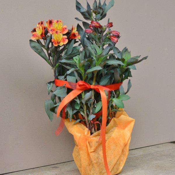Blütenreicher Sommer in orange Bild 1