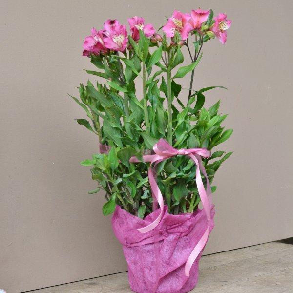 Blütenreicher Sommer in rosa Bild 1