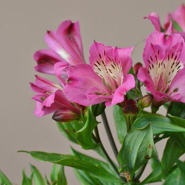 Blütenreicher Sommer in rosa Bild 2